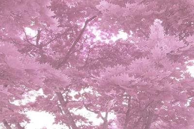 Lyserøde blade